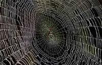 mạng nhện